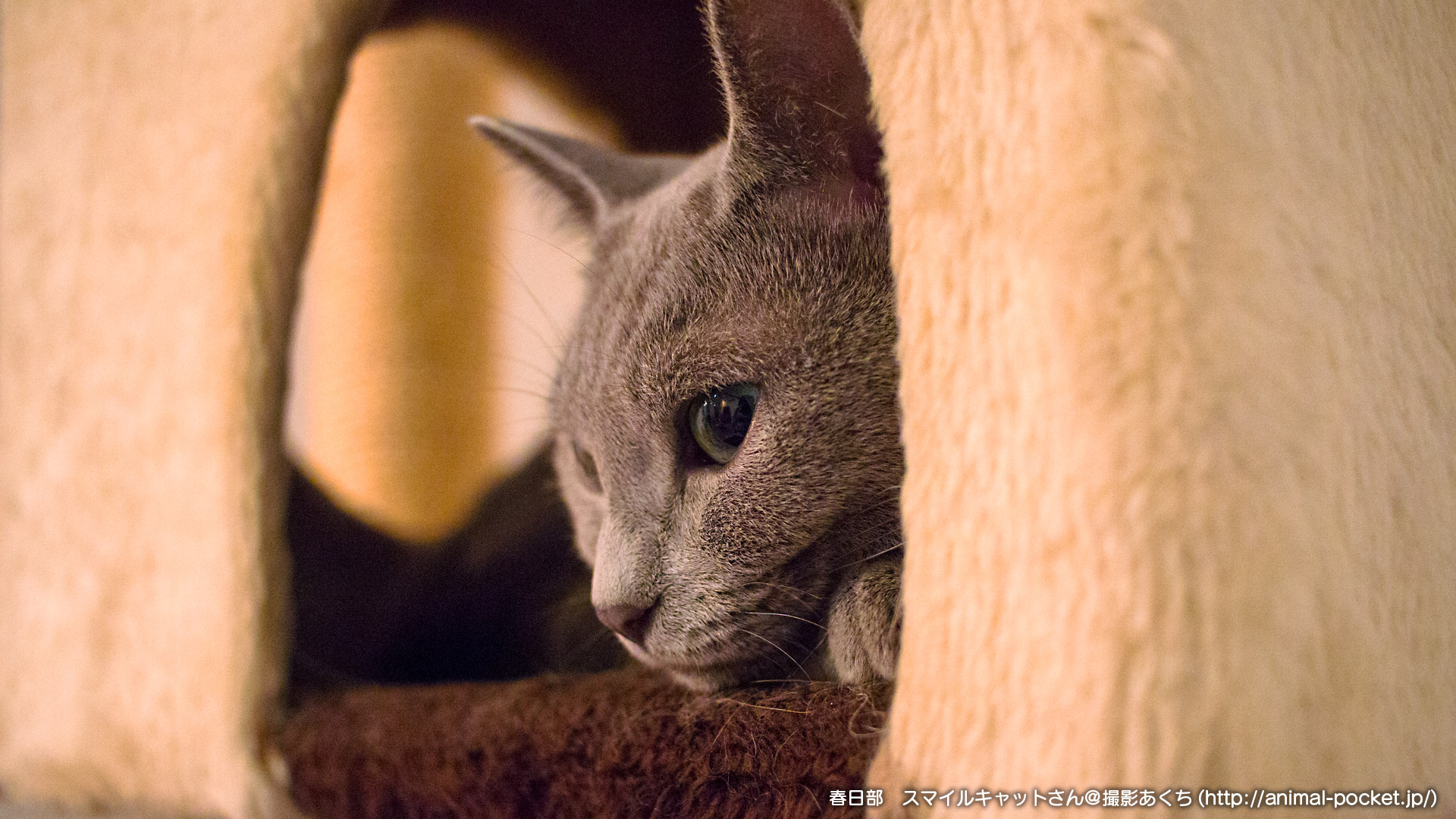 猫カフェ「スマイルキャット」4