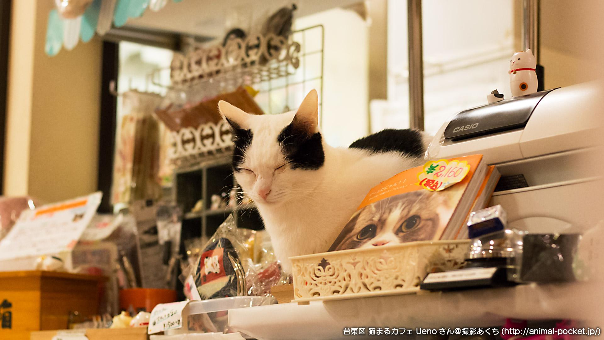 猫カフェ「猫まるカフェ Ueno」