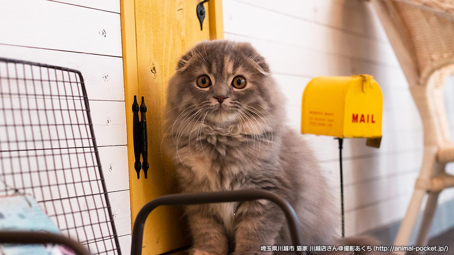 猫カフェ「猫家 川越店」