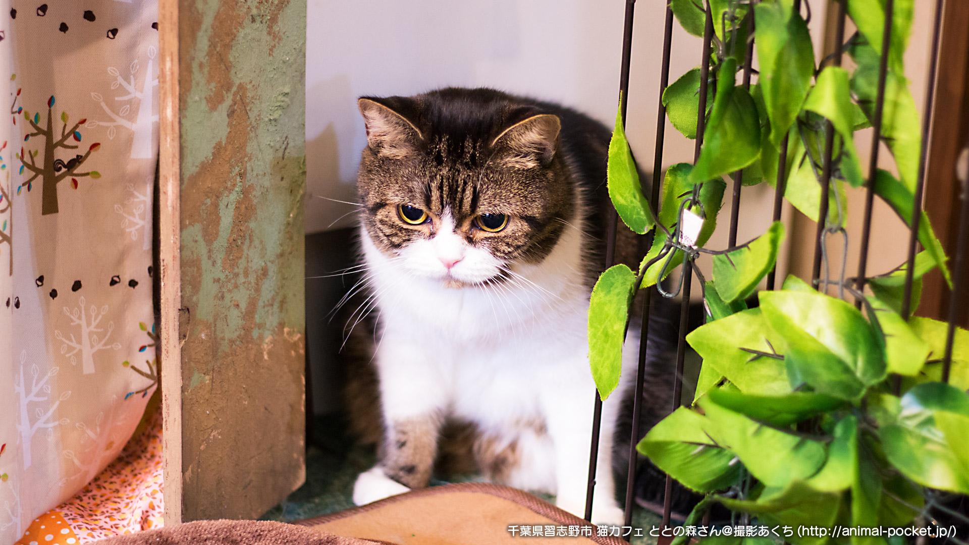 猫カフェ「ととの森」