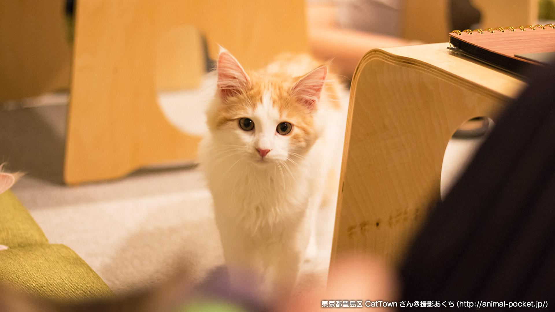 猫カフェ「キャットタウン」