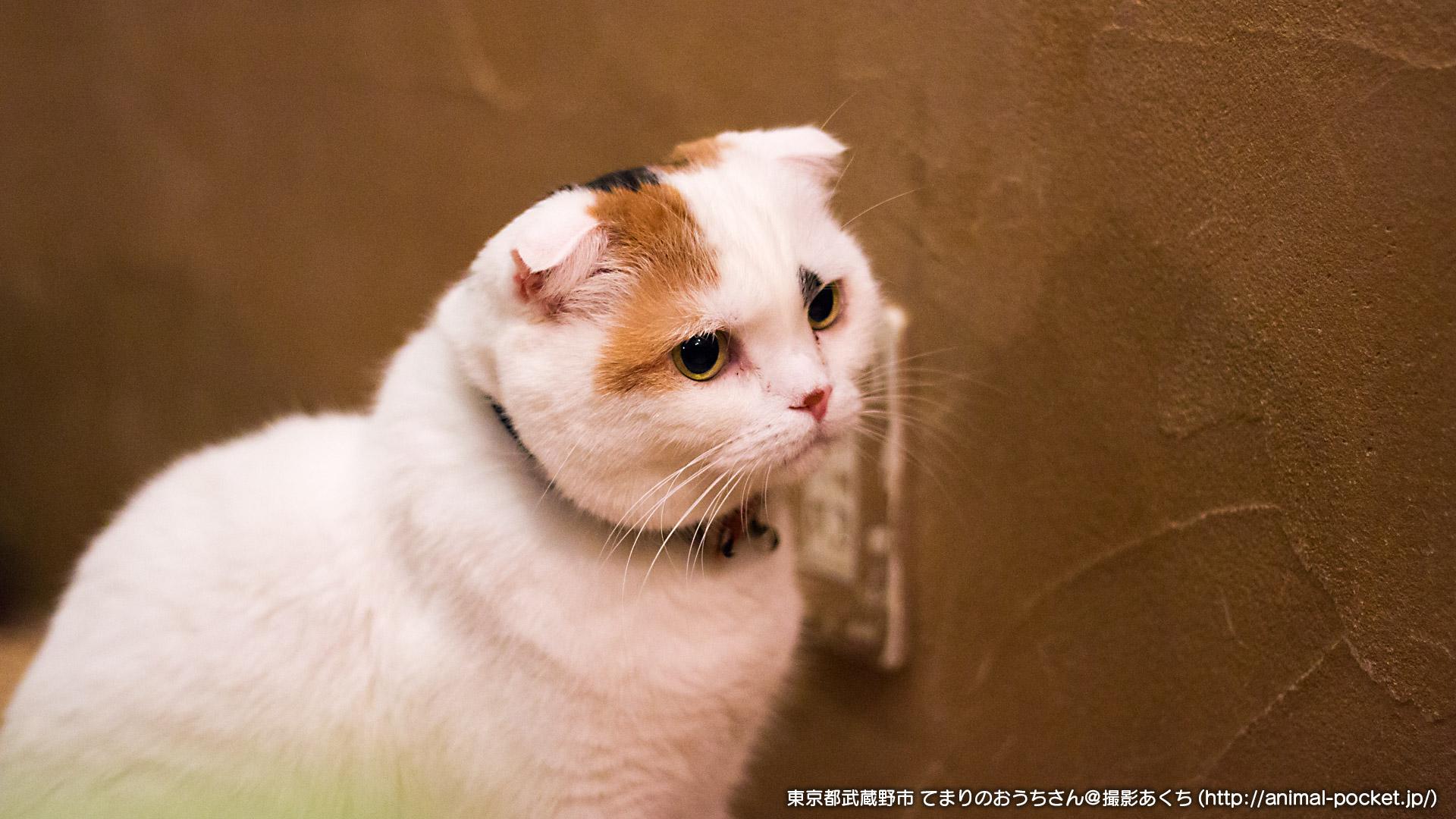 猫カフェ「てまりのおうち」