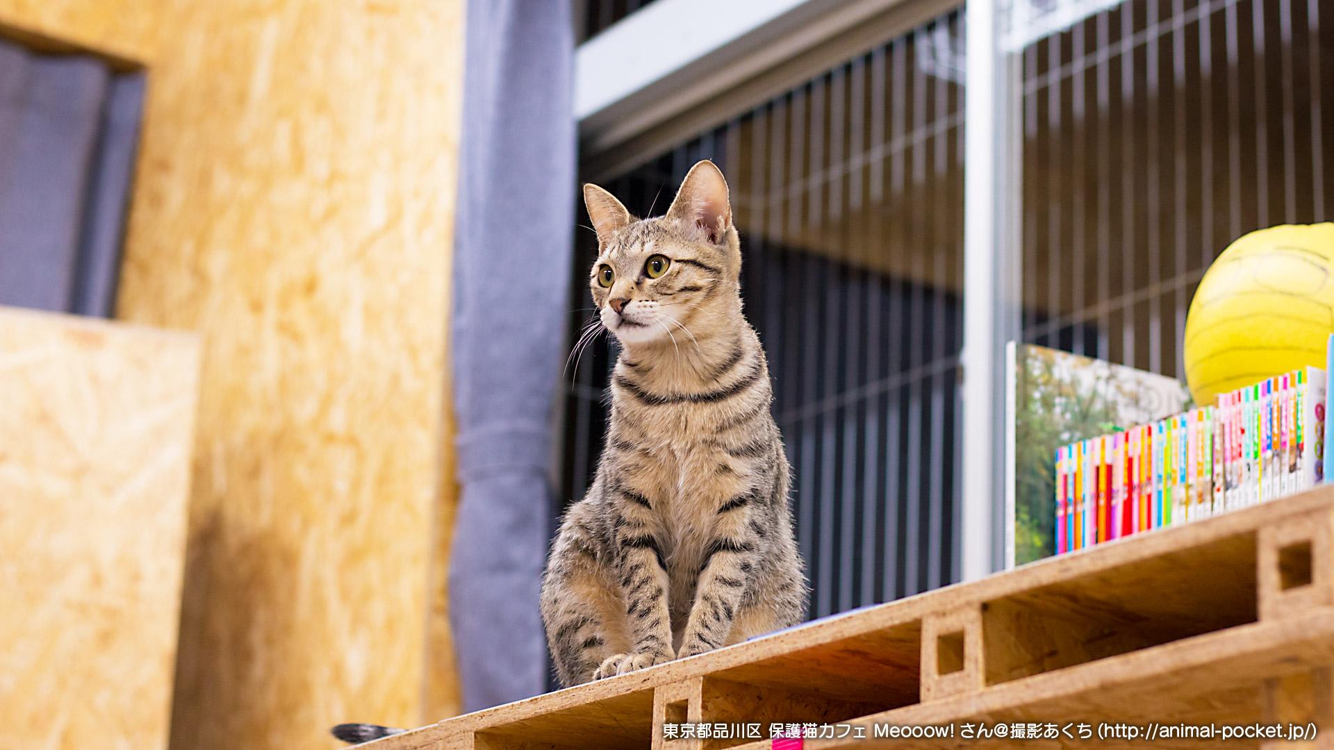 猫カフェ「保護猫カフェ Meooow!(ミャーーーオ)」
