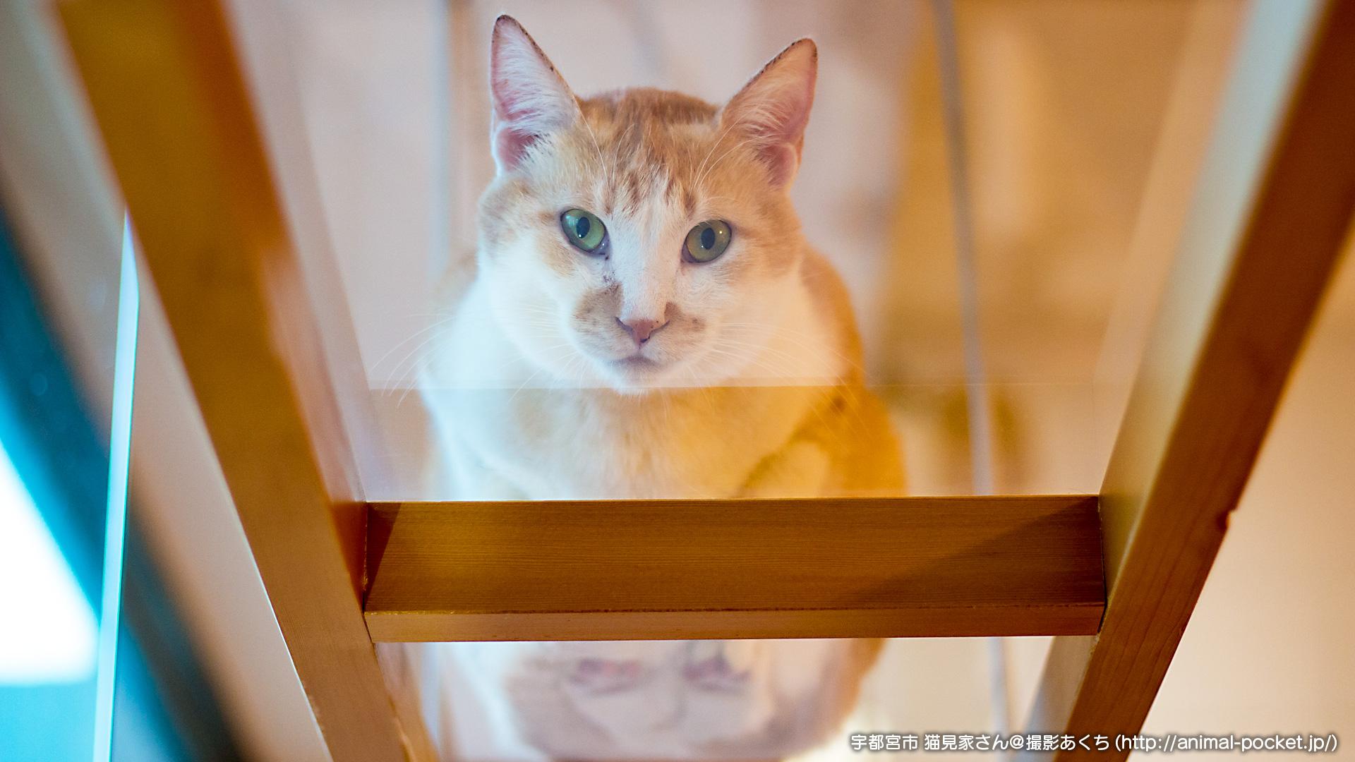 猫カフェ「猫見家」