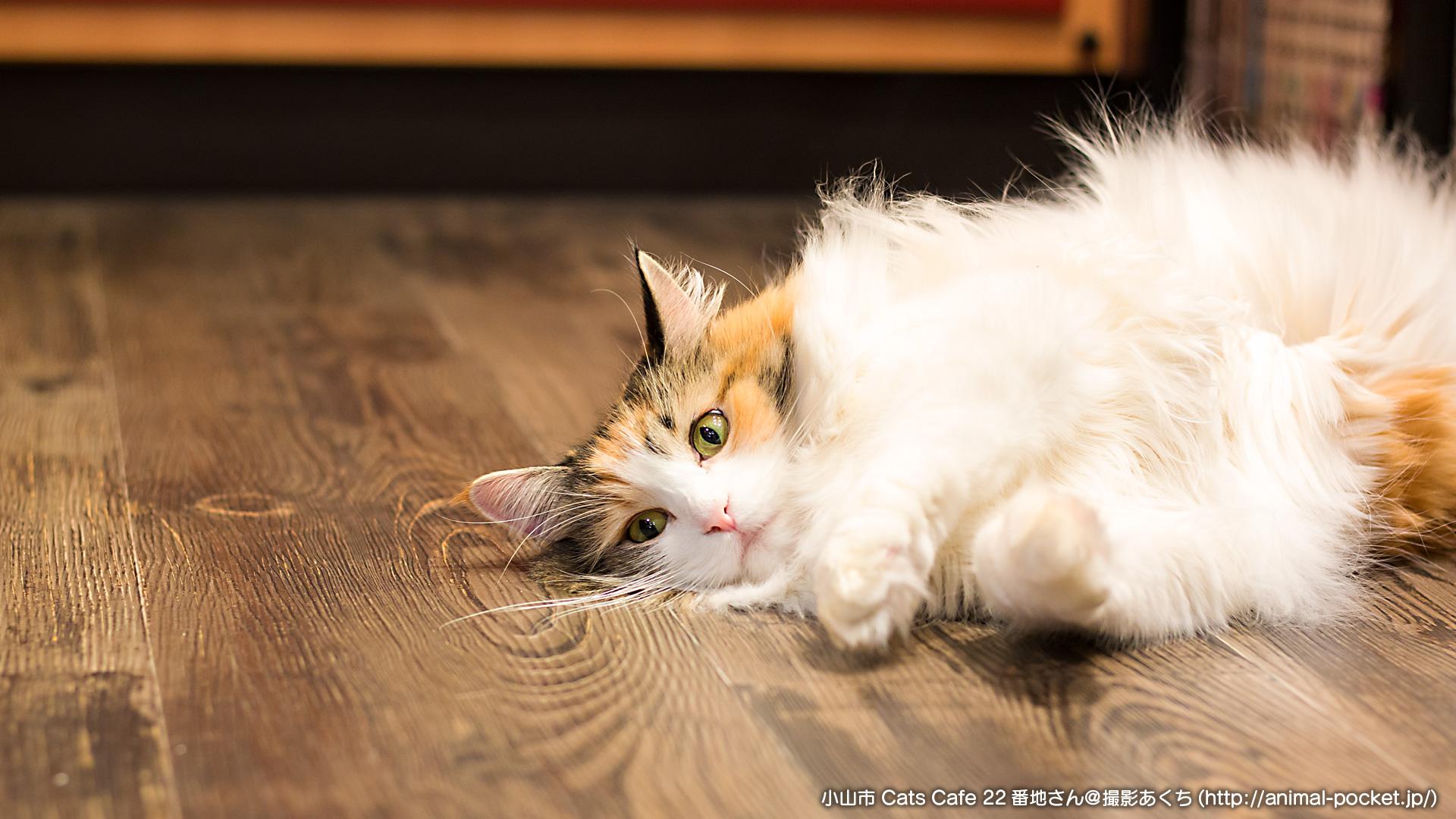 猫カフェ「Cats Cafe 22番地」