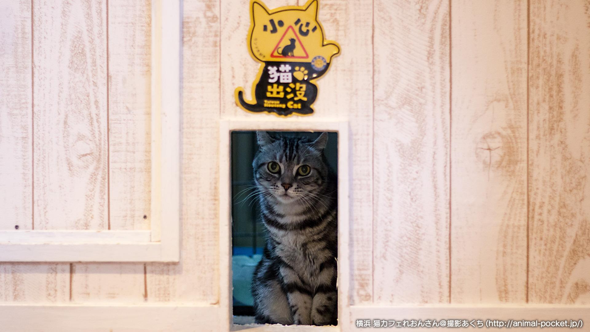猫カフェ「猫カフェれおん」