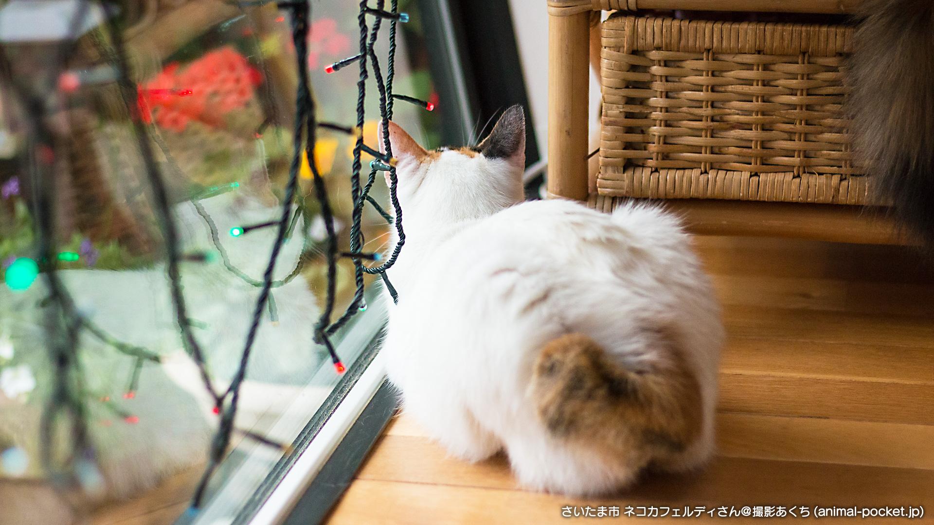 猫カフェ「ネコカフェルディ」