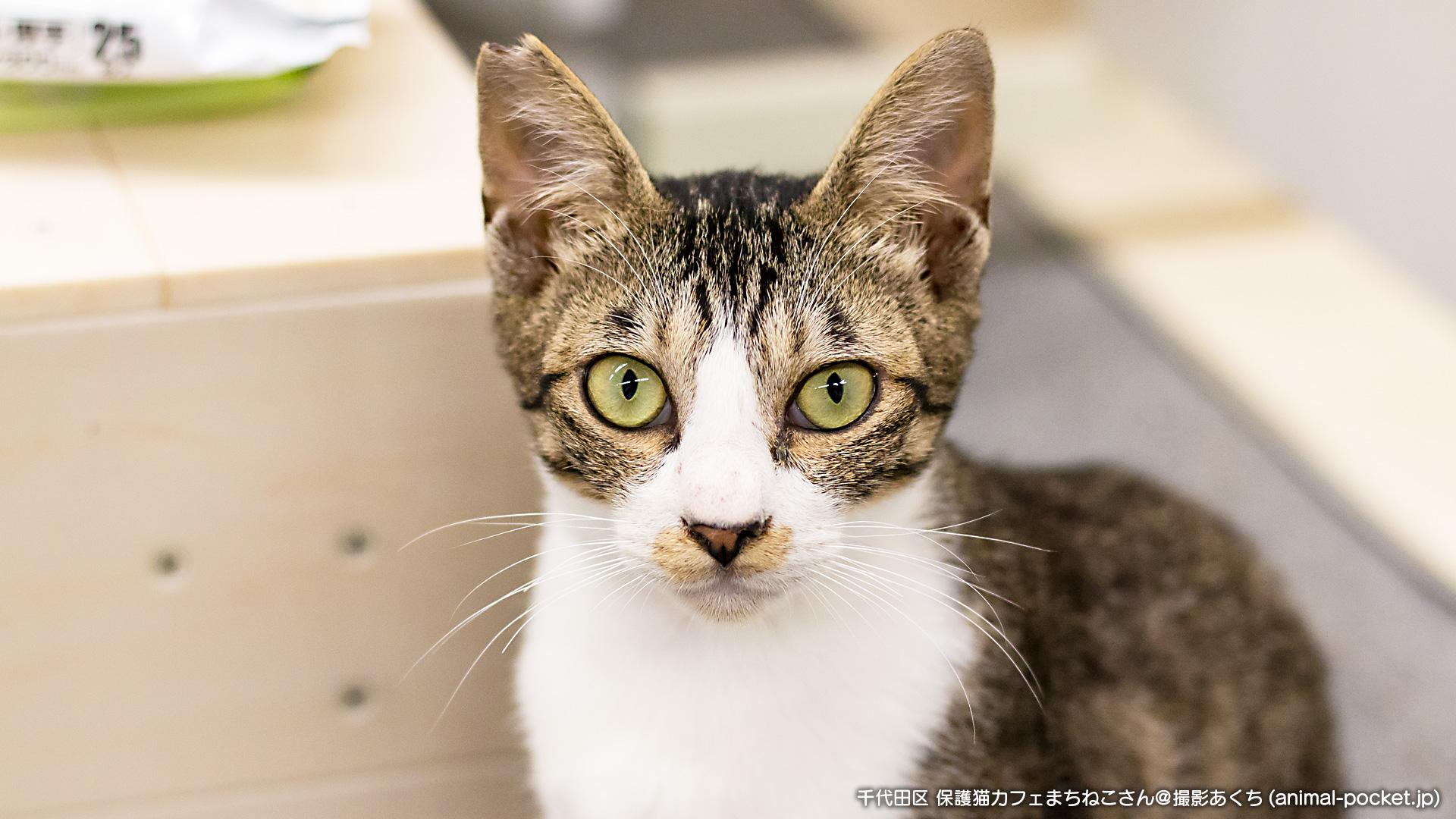 保護猫カフェ「まちねこ」