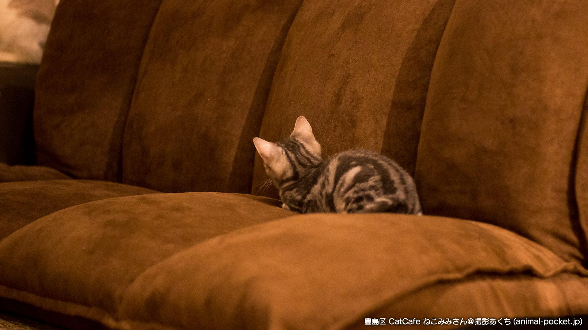 猫カフェ「Cat Cafe ねこみみ」