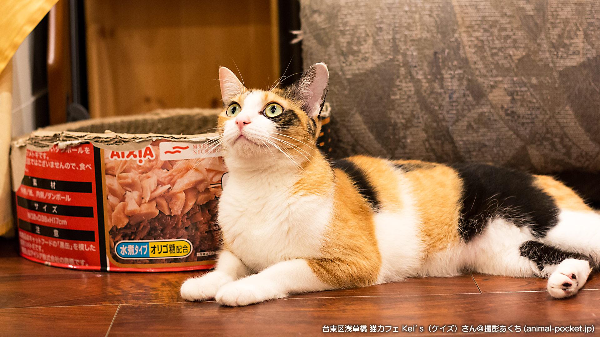 猫カフェ「猫カフェ Kei's(ケイズ)」