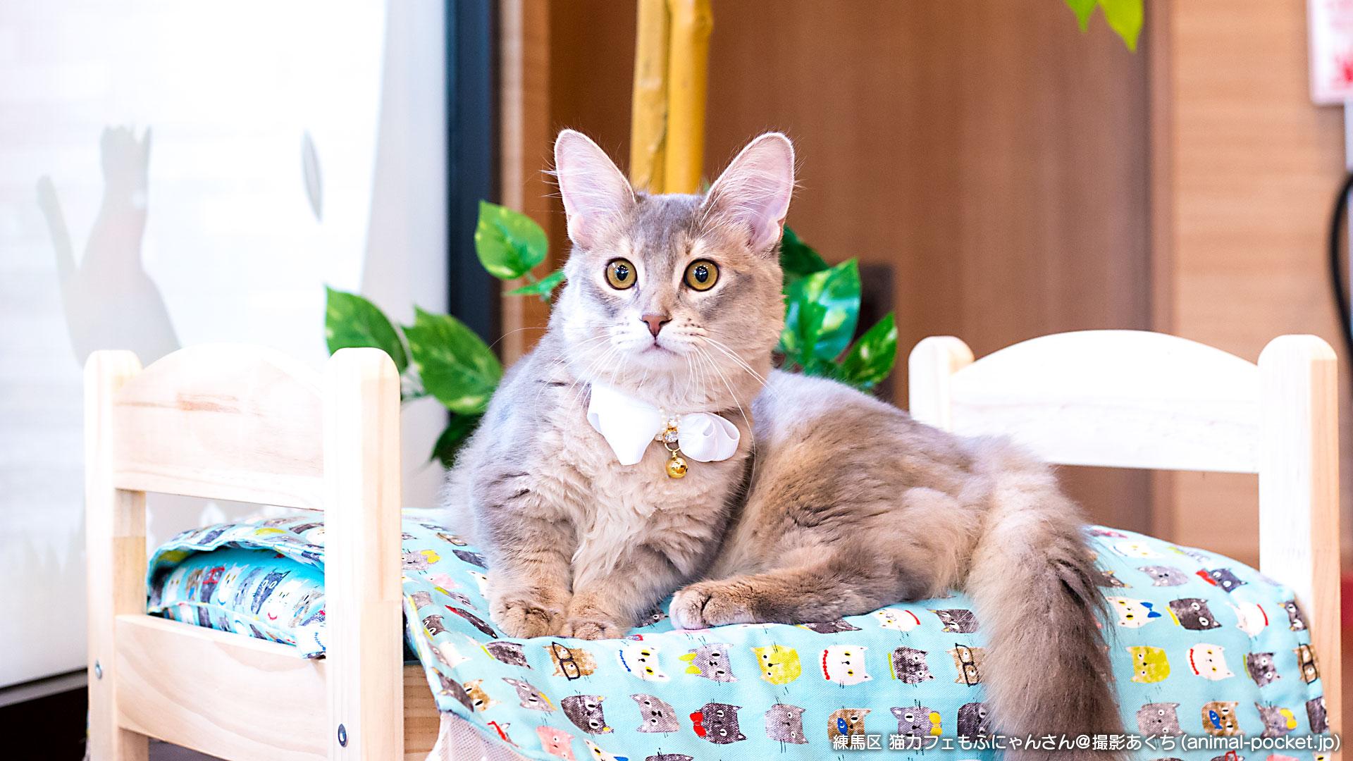 猫カフェ「もふにゃん」